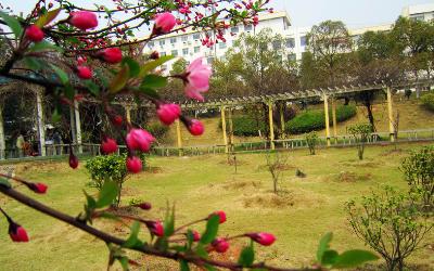 在深圳报读外省大学的成人高考需要去外省考试吗
